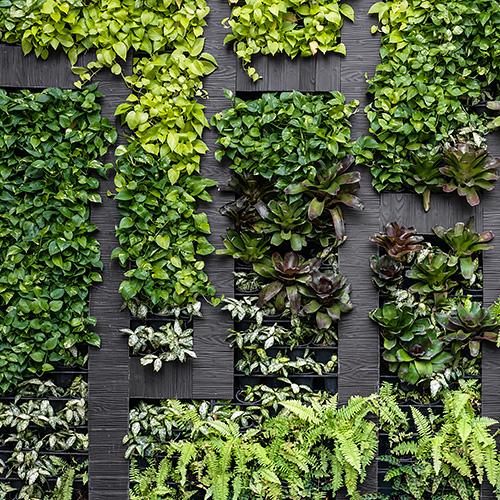 mur-vegetal-carre