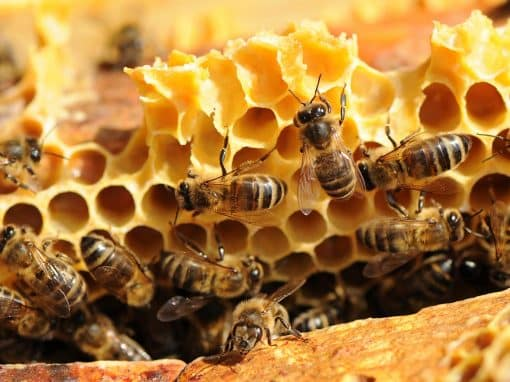 Propertis parraine les abeilles