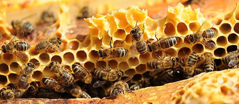 Propertis parraine des apiculteurs