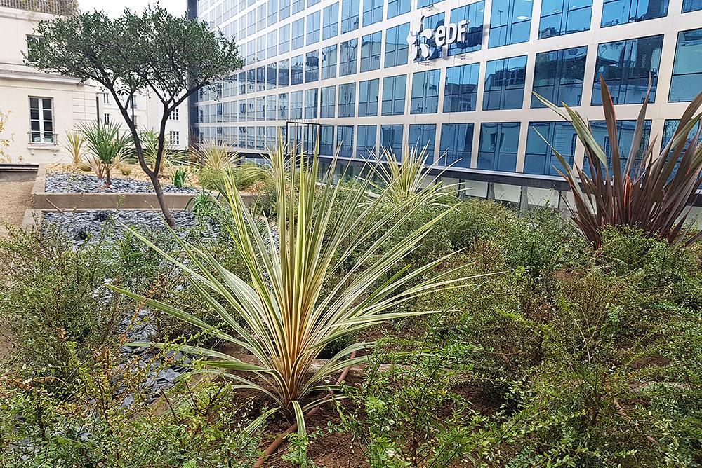 Réaménagement d'un toit terrasse végétalisé